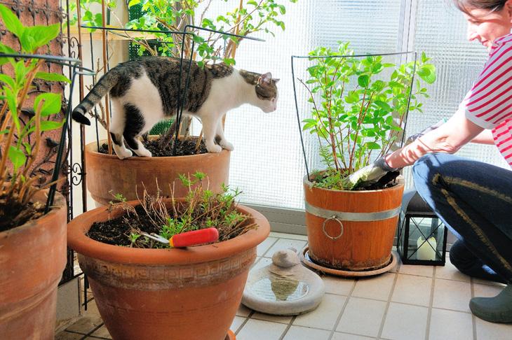 Gärtnern Auf Balkon Und Terrasse | Wir Leben Nachhaltig Gemuse Im Blumentopf Garten Balkon Tipps