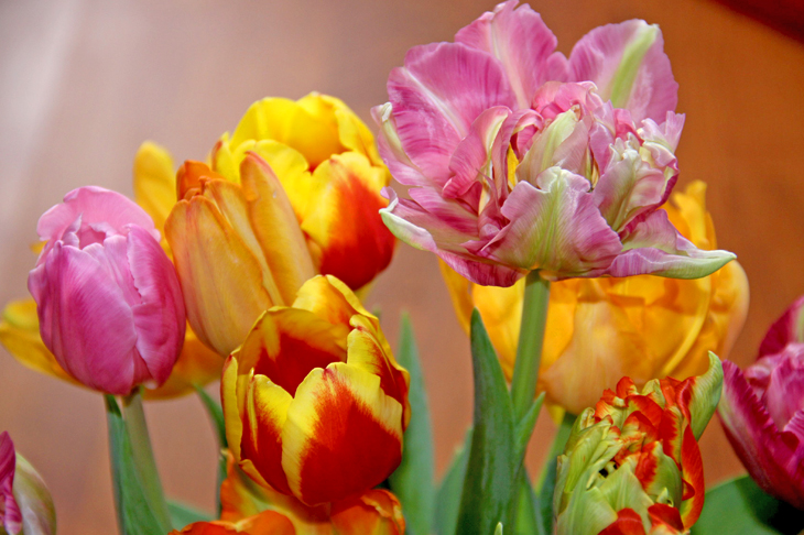 Valentinstag: Blumen Schenken | Wir Leben Nachhaltig Blumen Schenken Tipps
